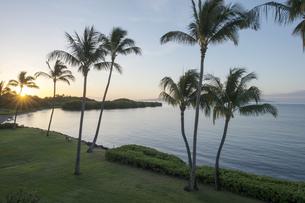 プコオビーチと椰子の木とサンライズ、モロカイ島、ハワイの写真素材 [FYI00444096]