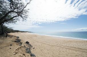 Polifua Beachの素材 [FYI00444150]