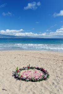 フレミングビーチとウエディングフラワー、マウイ島、ハワイ-1の写真素材 [FYI00444175]