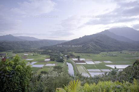 ハナレイ渓谷展望台、カウアイ島、ハワイ-1の写真素材 [FYI00444183]
