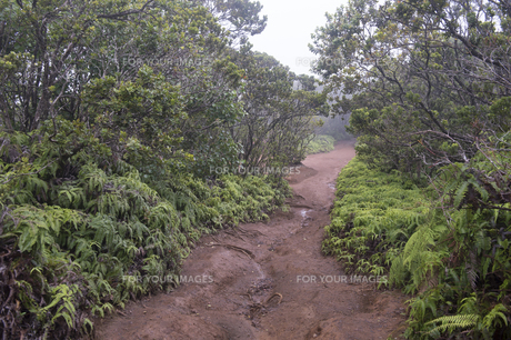 ピヘアトレール、コケエ州立公園、カウアイ島、ハワイ-1の素材 [FYI00444282]
