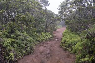 ピヘアトレール、コケエ州立公園、カウアイ島、ハワイ-1の写真素材 [FYI00444282]