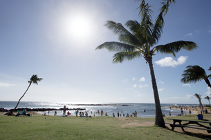 ポイプビーチパーク、カウアイ島、ハワイ-1の写真素材 [FYI00444295]