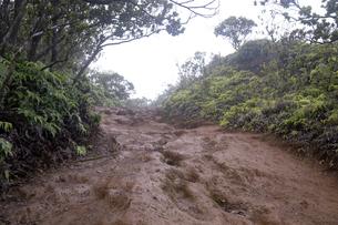 ピヘアトレール、コケエ州立公園、カウアイ島、ハワイ-2の写真素材 [FYI00444298]
