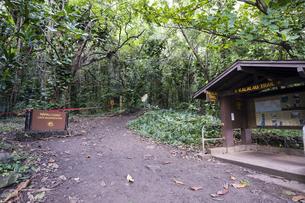 カララウトレイル、カウアイ島、ハワイ-8の写真素材 [FYI00444313]