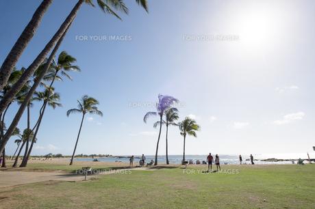 ソルトポンドビーチパーク、カウアイ島、ハワイ-1の素材 [FYI00444342]