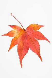 fallen_leaves_059の写真素材 [FYI00444391]