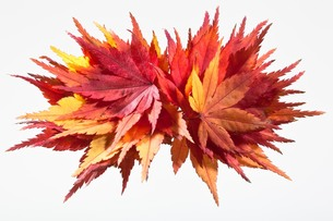 fallen_leaves_120の写真素材 [FYI00444395]