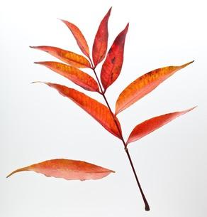 fallen_leaves_138の写真素材 [FYI00444399]