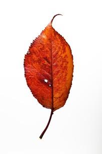 fallen_leaves_030の写真素材 [FYI00444400]