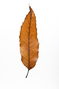fallen_leaves_008の写真素材 [FYI00444401]