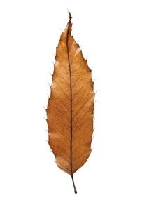 fallen_leaves_035の写真素材 [FYI00444402]
