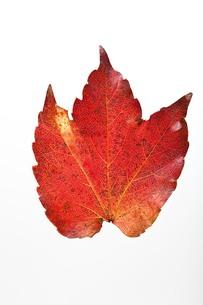 fallen_leaves_040の写真素材 [FYI00444410]