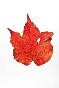 fallen_leaves_041の写真素材 [FYI00444411]