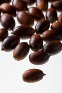 seed(acorn)_031の写真素材 [FYI00444413]