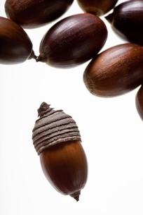 seed(acorn)_035の写真素材 [FYI00444416]