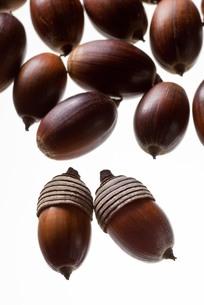 seed(acorn)_037の写真素材 [FYI00444417]