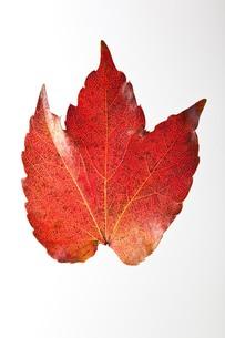fallen_leaves_042の写真素材 [FYI00444421]