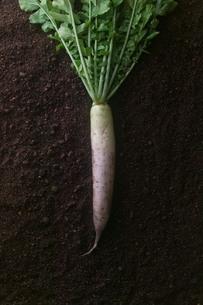 japanese white radish_01の素材 [FYI00444422]