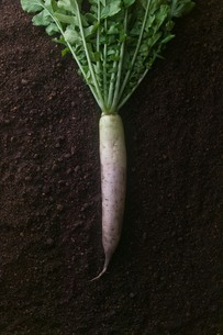 japanese white radish_01の写真素材 [FYI00444422]