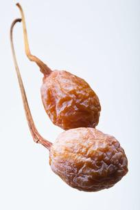 seed(ginkgo_nut)_003の写真素材 [FYI00444425]