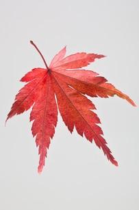 fallen_leaves_070の写真素材 [FYI00444431]