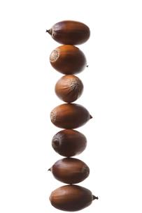seed(acorn)_021の写真素材 [FYI00444436]