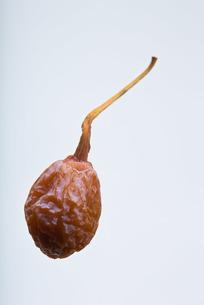 seed(ginkgo_nut)_001の写真素材 [FYI00444439]