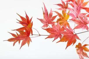 fallen_leaves_183の写真素材 [FYI00444442]