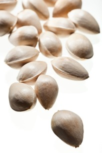 seed(ginkgo_nut)_046の写真素材 [FYI00444444]