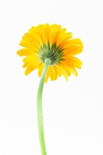 flower_033の写真素材 [FYI00444445]