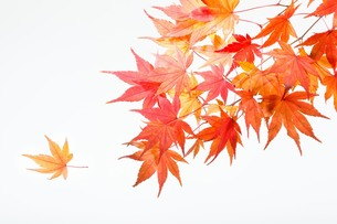 fallen_leaves_227の写真素材 [FYI00444448]