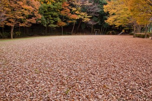 leaves_13の写真素材 [FYI00444500]