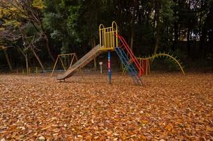 leaves_15の写真素材 [FYI00444514]