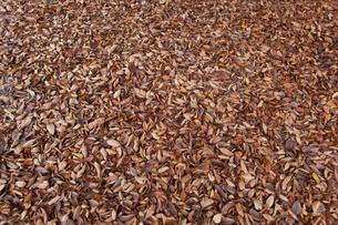 leaves_05の写真素材 [FYI00444527]