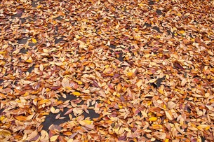 leaves_04の写真素材 [FYI00444535]
