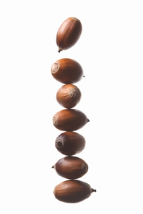 seed(acorn)_022の写真素材 [FYI00444628]