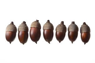 seed(acorn)_020の写真素材 [FYI00444630]