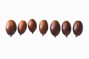 seed(acorn)_019の写真素材 [FYI00444634]