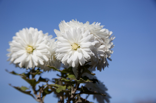 flower(a)_047の写真素材 [FYI00444731]