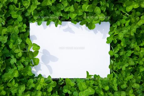 paper_clover_042の素材 [FYI00444747]