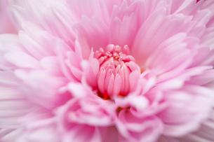 flower(a)_053の写真素材 [FYI00444751]