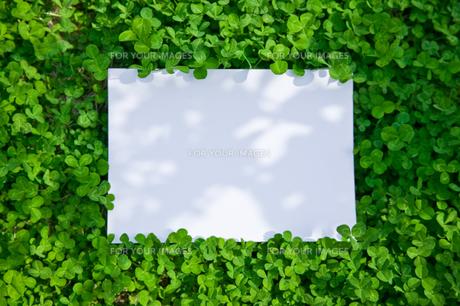 paper_clover_029の素材 [FYI00444765]