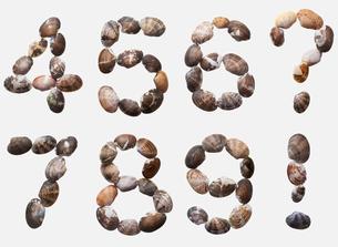 ABC[allittleneck_clam]_06の写真素材 [FYI00445022]