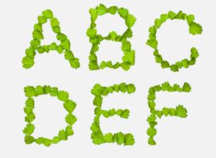 ABC[leafs_A]_01の写真素材 [FYI00445024]