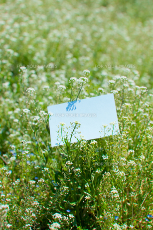 letter[shepherd's_purse]_001の写真素材 [FYI00445082]