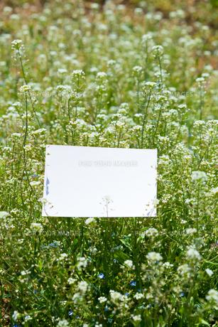 letter[shepherd's_purse]_007の写真素材 [FYI00445093]