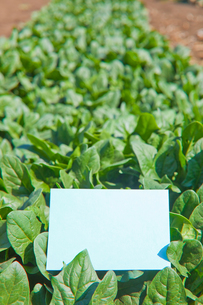 letter[spinach]_003の写真素材 [FYI00445099]