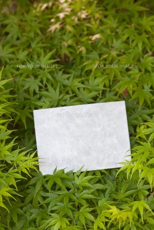 letter[maple]_20の素材 [FYI00445181]