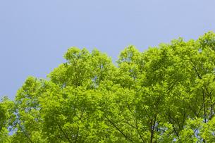 background[tree]_20の素材 [FYI00445313]